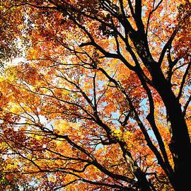 Debbie Oppermann - Wild Autumn