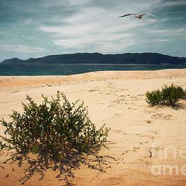 Carlos Caetano - Wild Beach