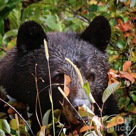 Nava Thompson - Wild Bear Wild Cherries