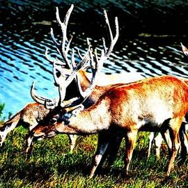 Anand Swaroop Manchiraju - Wild Beauty-3
