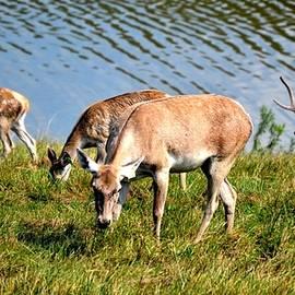 Anand Swaroop Manchiraju - Wild Beauty