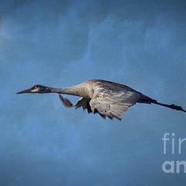Janice Rae Pariza - Wild Blue Yonder Flight