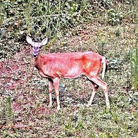 James Potts - Wild Deer of Tucker Mill