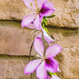 Barbara Zahno - Wild Delicate Orchid