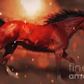 Kathy Franklin - Wild Fire