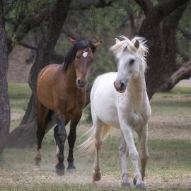 Saija  Lehtonen - Wild Horse Evening Walk