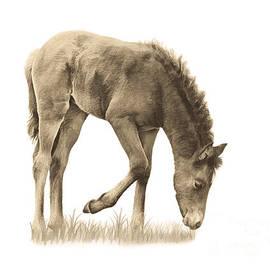 Priscilla Burgers - Wild Horse Grazing