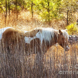 Tom Gari Gallery-Three-Photography - Wild Horse Of Assateague