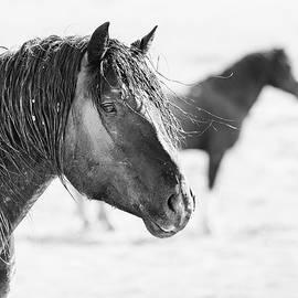 Max Waugh - Wild Horse Portrait