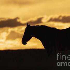 Priscilla Burgers - Wild Horse Sunrise