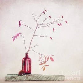 Priska Wettstein - Wild rosehips in a bottle