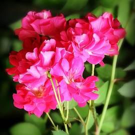 Jean Connor - Wild Roses