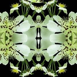 Nancy Pauling - Wild Roses