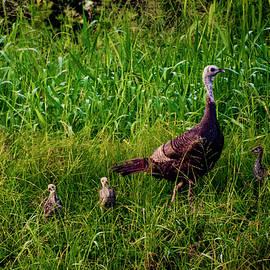 Dick Hudson - Wild Turkey Family
