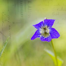Michel Emery - Wild violets