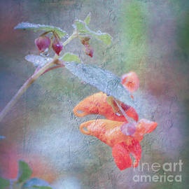 Kerri Farley - Wildflower Art - Jewelweed