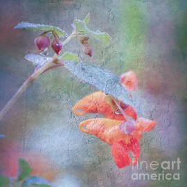 Kerri Farley - Wildflower Art - Jewelweed