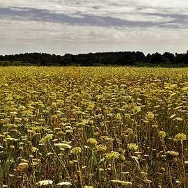Olga Zavgorodnya - Wildflower Meadow in P.E.I.
