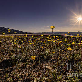 Janis Knight - Wildflower Super Bloom through the Fisheye