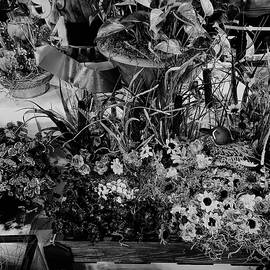 John Straton - Wildflower  v46