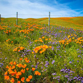 Lynn Bauer - Wildflower Wonders of the High Desert