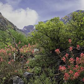 Lynn Bauer - Wildflower Wonders of the High Sierra