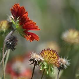 Maria Urso  - Wildflowers 1