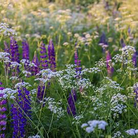 Anna Matveeva - Wildflowers at sunset