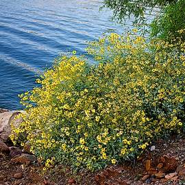 Barbara Zahno - Wildflowers at the Lake