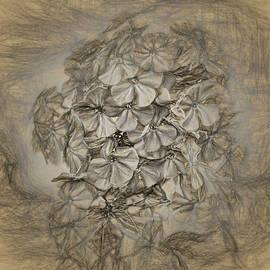 William Sturgell - Wildflowers in Sepia