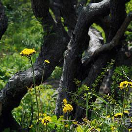 Georgia Sheron - Wildflowers Lost In The Woods