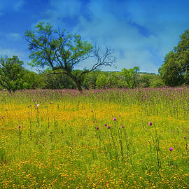 Lynn Bauer - Wildflowers of the Willow City Loop