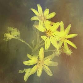 Peggy Blackwell - Wildflowers
