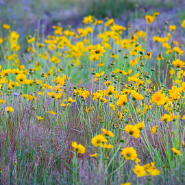 Black Brook Photography - Wildflowers - Yellow and Purple