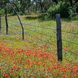Lynn Bauer - Willow City Roadside Wildflowers
