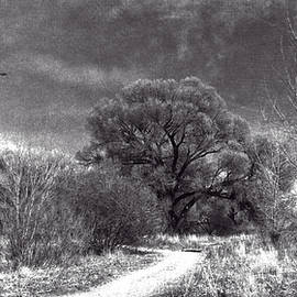 Sandra Selle Rodriguez - Willow Preserve with Ravens