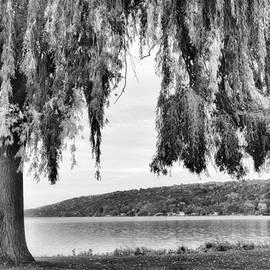 Jessica Jenney - Willows of Lake Cayuga