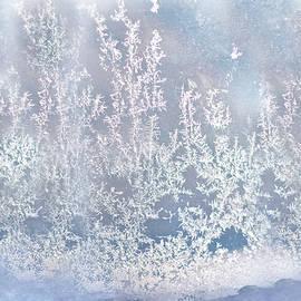 Gwen Gibson - Window Frost Print