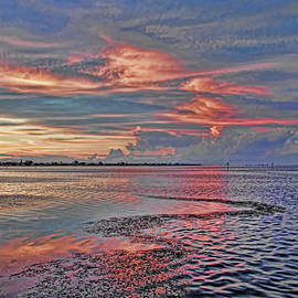 HH Photography of Florida - Windswept