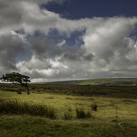 Philip Cartwright - Windswept