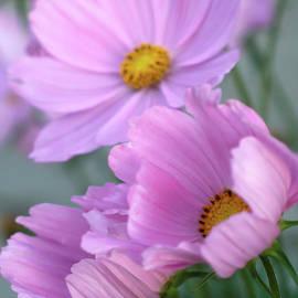 Tuija Karhinen - Windy pink flowers