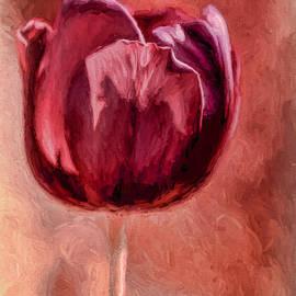 Wine Tulip