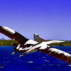 Miroslava Jurcik - Wing Span Of Pelican And Seagull