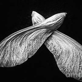Arne Hansen - Wings