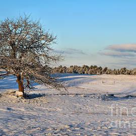 Sandra Huston - Winter At Dawn