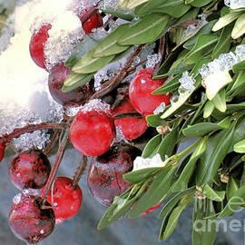 Janice Drew - Winter Berries