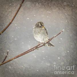 Janice Rae Pariza - Winter Branches