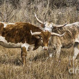 Janice Rae Pariza - Winter Colorado Longhorns