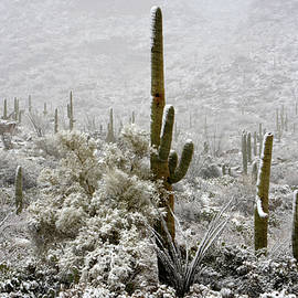 Saija Lehtonen - Winter Comes to the Desert