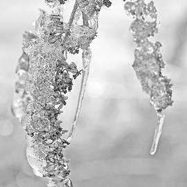 Mother Nature - Winter Crystal - Just Before Spring - Black and White